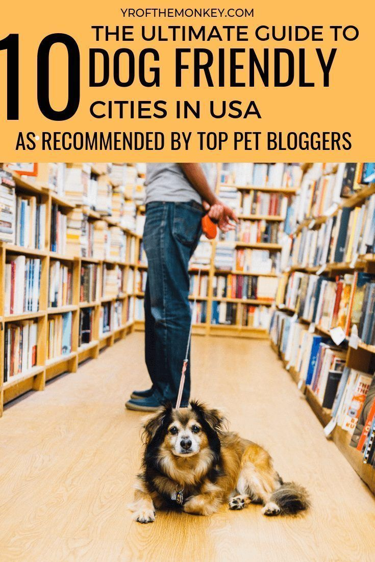 Most Dog Friendly Cities In Us A Guide By Traveling Pet Parents