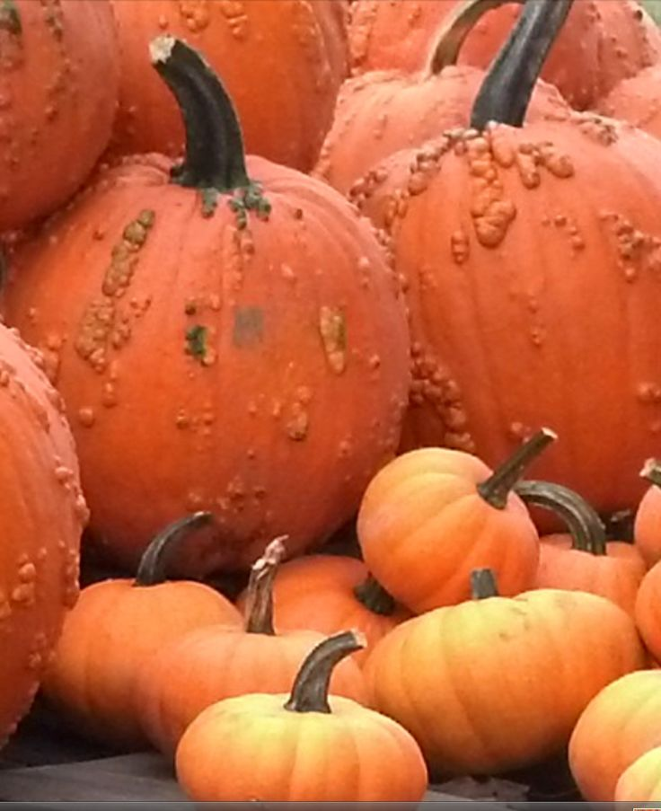 14 Best Images About Grouping On Pinterest Mini Pumpkins