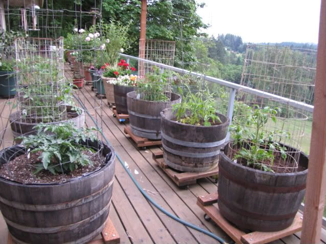 Vegetable Patio Garden. Having the containers on carts makes life a little easier.