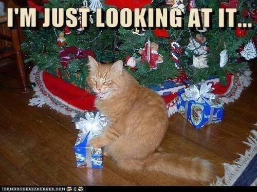 439 best Christmas Cats images on Pinterest | Christmas animals ...