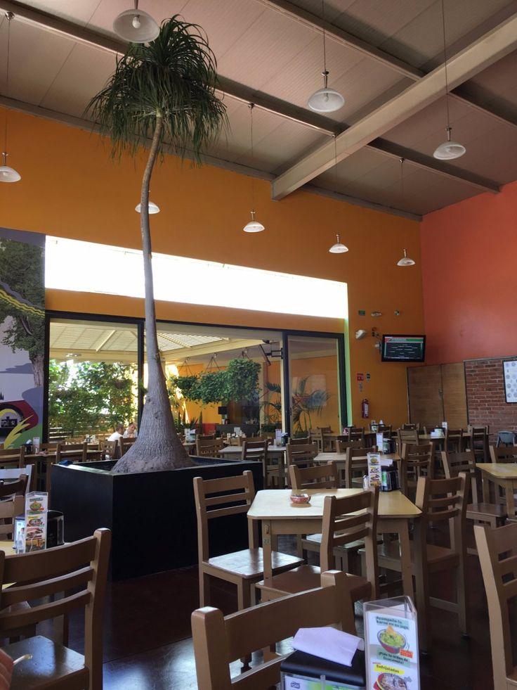Karne Garibaldi, Guadalajara - Fotos, Número de Teléfono y Restaurante Opiniones - TripAdvisor