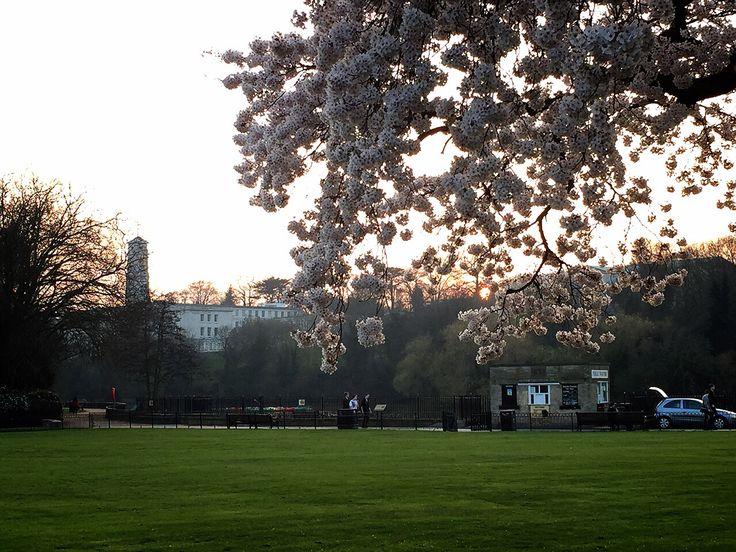 Evening Spring University park, University of Nottingham