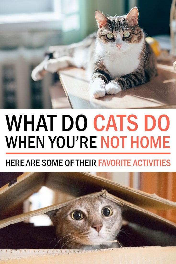 What Do Cats Do When You Re Not At Home Sunset Veterinary Clinic Cats Veterinary Clinic Veterinary
