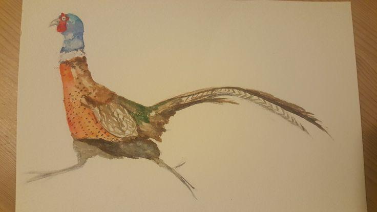 Run pheasant, run!