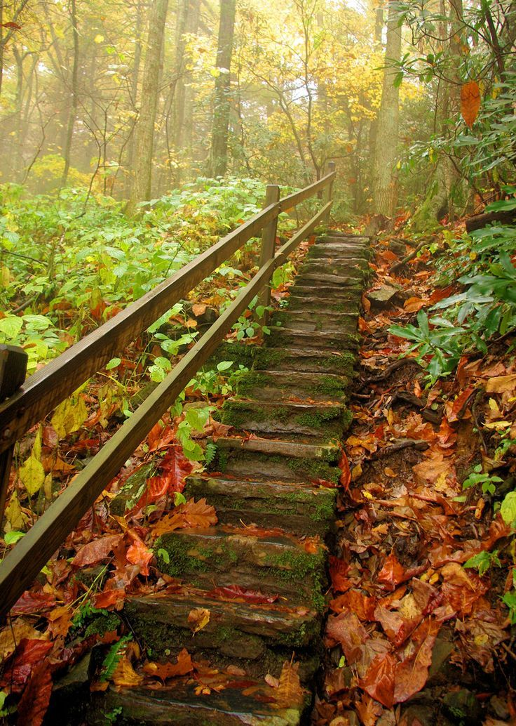 Stairway to Heaven in Pisgah National Forest in NC on a fall hike. Add this to your road trip or fall travel plans.