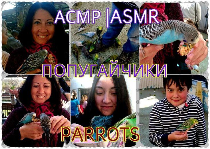 АСМР|ASMR Звуки и щебетание птиц | Sounds birds chirping| AMERICA GARTOLAND