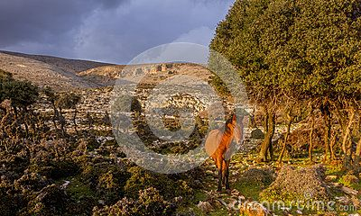 Skyros is known for the rare native horse race that can only be found on that island and nowhere else. They are smaller than the normal horses, bigger than ponnies, and live freely in the inhabited southern part of the island.