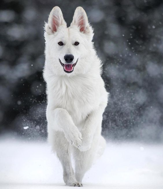 Pin By Kenda Davis 3 Peat On Home Style Dogs Snow Dogs