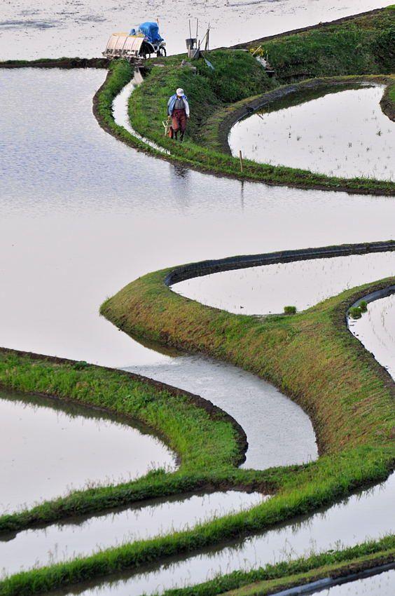 Terraced rice paddies in Hyogo, Japan