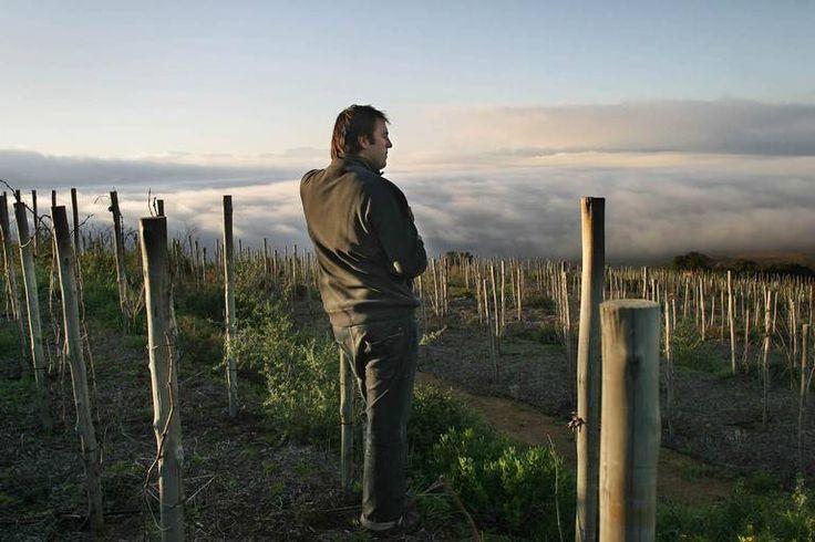 Les om nydelige viner fra Sør-Afrika. Eden Sadie i vinmarken Clos Cheval. #vinguiden #smak