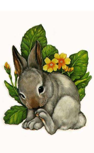 Best 25 Rabbit Illustration Ideas On Pinterest