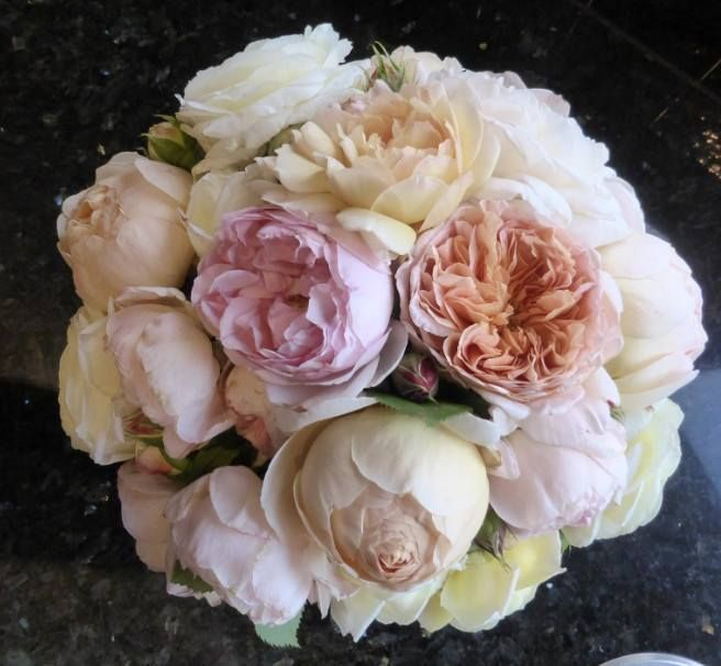 Today's bounty from the front yard ! David Austin roses X