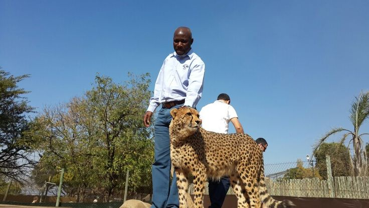 Activities that you can do around Johannesburg