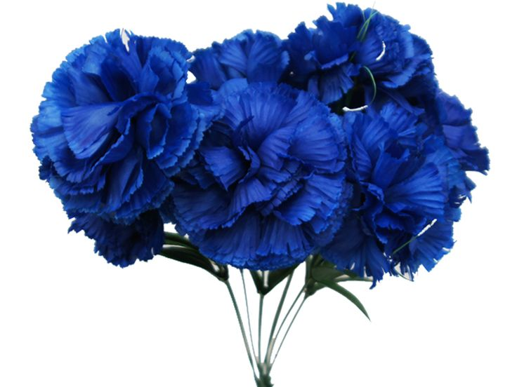 Blue carnations - for bouquet -one of the first bouquets from juliano