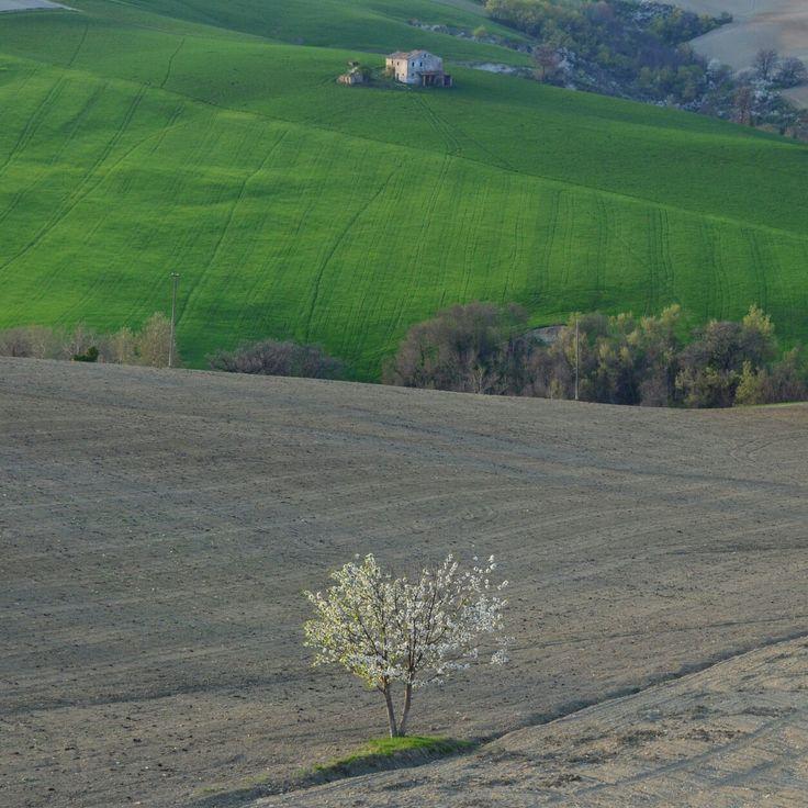 #Italian #landscape #italy #agricolture
