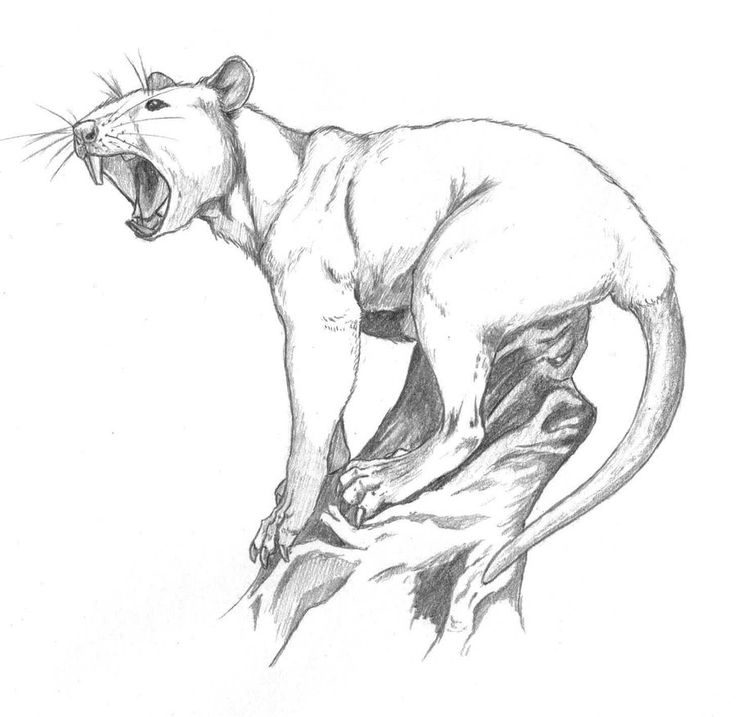 Concept sketch for another piece of speculative evolution... Perhaps a distant relative of the Atlas bear, this is my idea of a bear that has adapted to living in Africa, namely on the savannah and...
