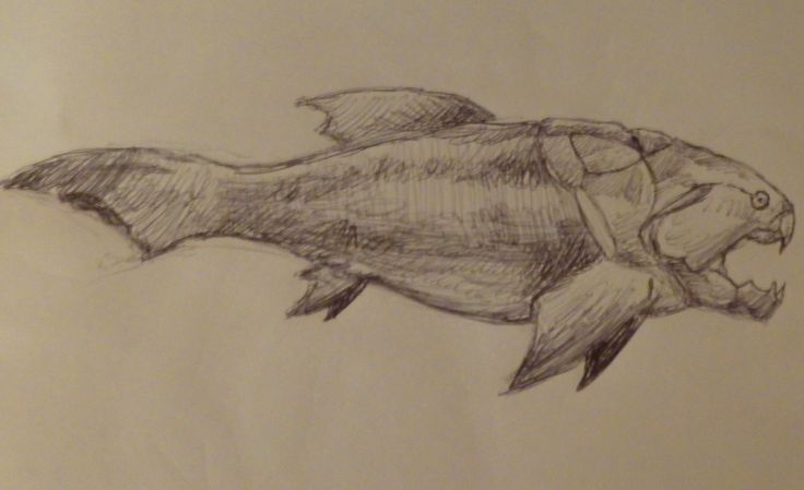 Dunkleosteus Drawing Galleryhipcom The Hippest Galleries