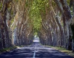 Afbeeldingsresultaat voor schaduwbomen voor terras