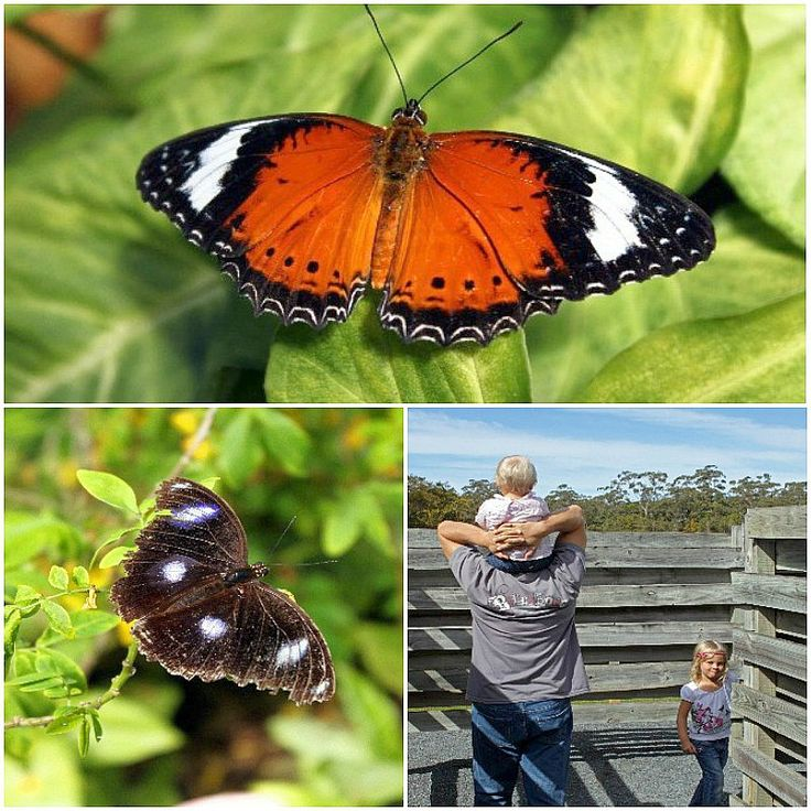 The Butterfly House - Coffs Harbour, Australia