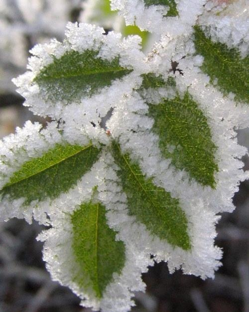 frost on leaves - Mother Nature's paintbrust