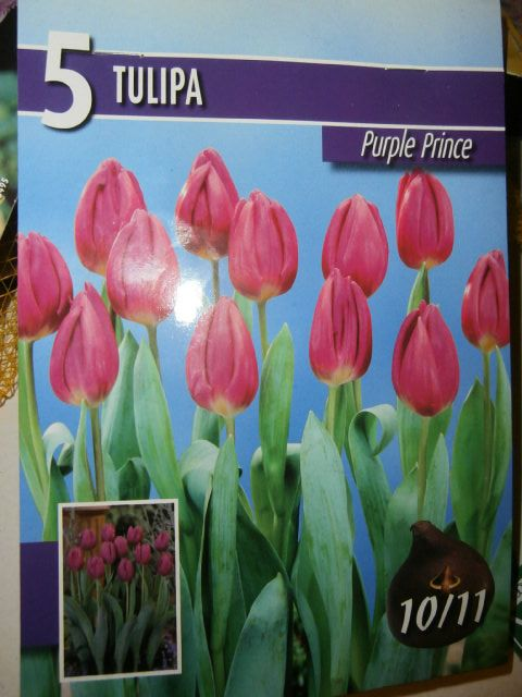 53 best autumn winter flower bulbs images on pinterest autumn tulips purple prince flower bulbs mightylinksfo Gallery