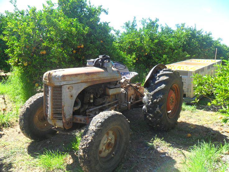 Waikerie, Orange Farm