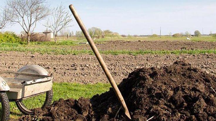 Banala activitate de a împrăștia gunoiul de grajd pe terenul a devenit un lux în agricultura românească. Astfel, în timp ce pentru a fertiliza cu produse chimice, agricultorii nu au nici o restricț…