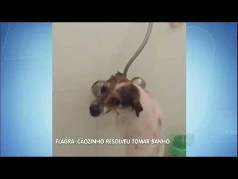 (29) Cão é flagrado tomando banho sozinho no banheiro do dono - YouTube