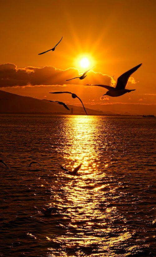 Seagull sunset in Izmir on Turkey's Aegean Sea coast