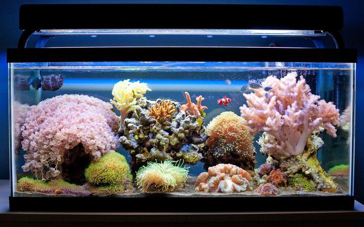 Aidan's Reef Aquarium. #tanque #zrmagazine #zonareef