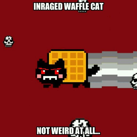 Inraged waffle cat not weird at all...|Meme Creater