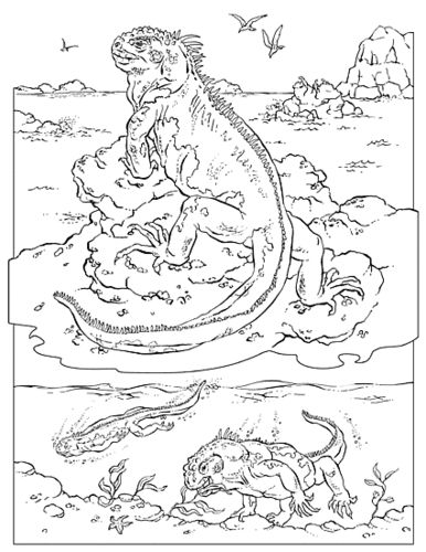 galapagos coloring pages turtle | Marine iguana (Galapagos) coloring | Coloring pages ...