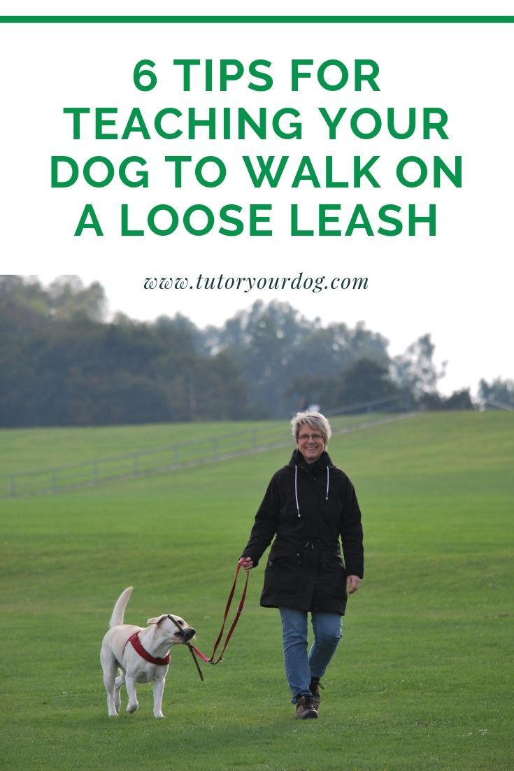6 Tips To Teach Your Dog To Walk On A Loose Leash Dog Walking