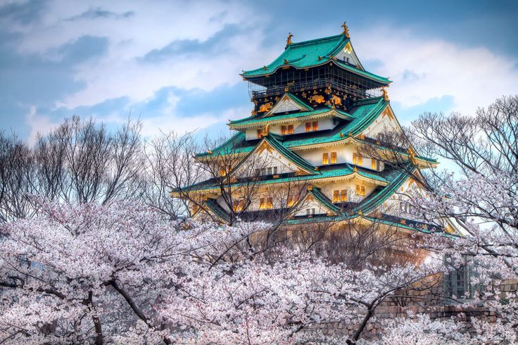Cidade, Japão, templo, céu, Primavera, cereja, cor Vetor