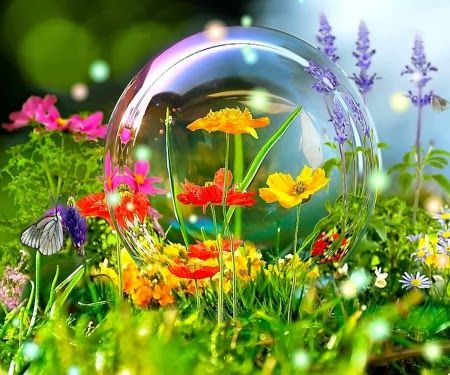106 best flowers in india images on pinterest sympathy flowers spring flowers and a big soap bubble mightylinksfo