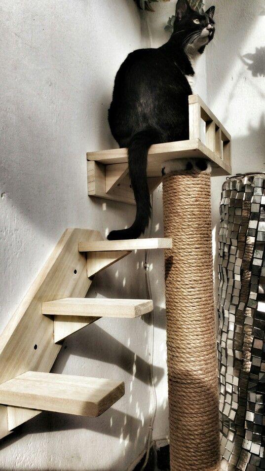 Escaleras para gatos. Con sobrantes de algunos de mis trabajos adecué un pequeño espacio para mi gata. Y ella ya esta feliz.