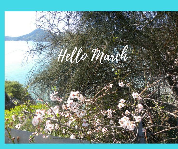 Welcome March! Wishing you a month filled with much love, happiness and health! Καλό Μήνα! Καλωσόρισες Μάρτη. Σας εύχομαι να είναι γεμάτος χαρά και υγεία! #Tolo #almondtree #almondblossoms #Τολό #ανθισμένηαμυγδαλιά