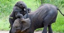 Etelä-Afrikka tunnetaan villieläimistä ja upeasta luonnosta