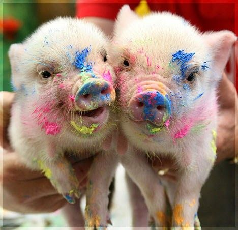 Finger painting piglets.