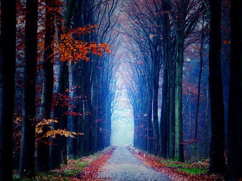 I'd love to walk down this road...