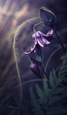Beautiful magical flowers - Szukaj w Google