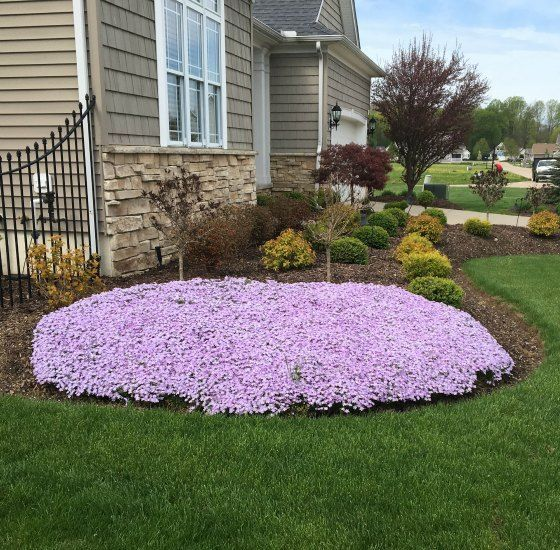 Creeping Phlox is easy to grow, easy to propagate and sells like crazy!  We potted the phlox in this pot last summer and they over wintered perfectly and bloomed like crazy this spring. Creeping Ph…