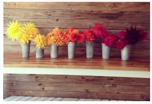 """Such a fantastic display of dahlias! """"The flower of San Francisco"""" <3"""