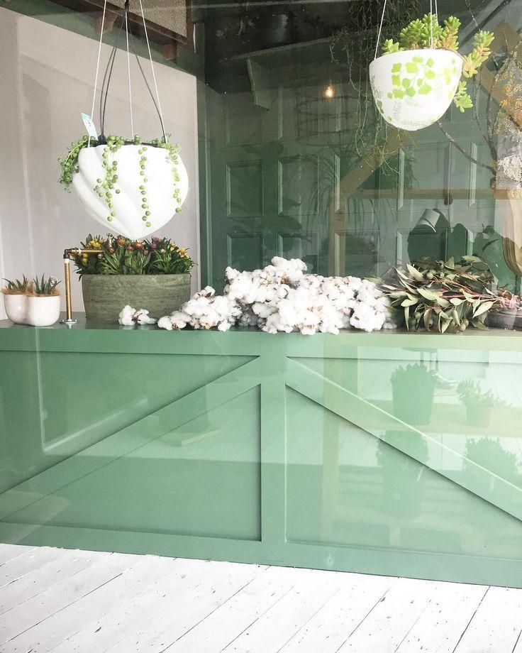 Open 'til 5pm today  #plants #flora #plantshop #homegoods #twigandmoss #shopsmall #huntervalley