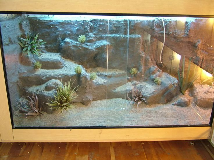 Realistic Leo Viv - Reptile Forums
