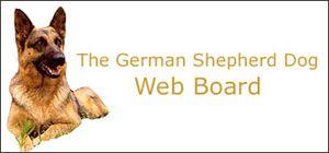 Selah`s Large Long Coat Old Fashioned Style Giant German Shepherd Dogs