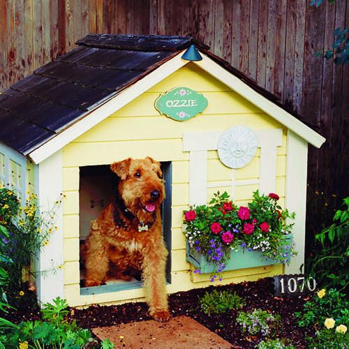 cute dog house! I love that she has her own house number.