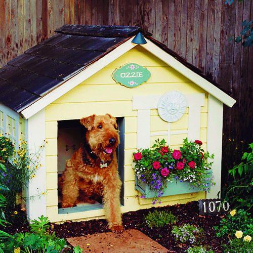 Small Backyard Ideas Dogs: 1000+ Ideas About Dog Friendly Garden On Pinterest