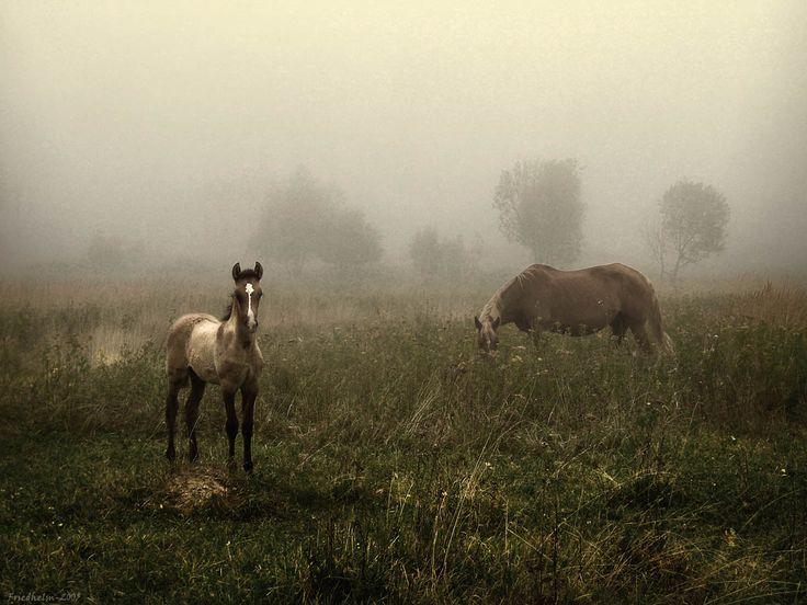 The Mist. © By Evgeny Fridgelm.