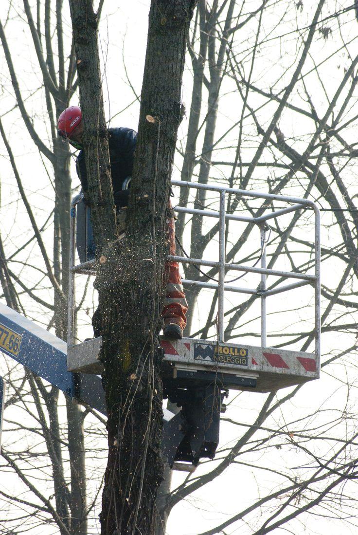 abbattimento di un albero a rischio di caduta #torino #agridea #stupinigi